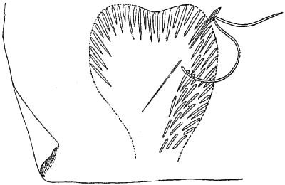 Method of working feather stitch